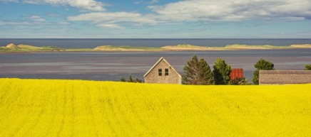 Shaun Lowe: Canola, Sunshine & The Sea