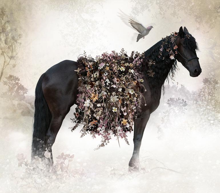 isabel-horse
