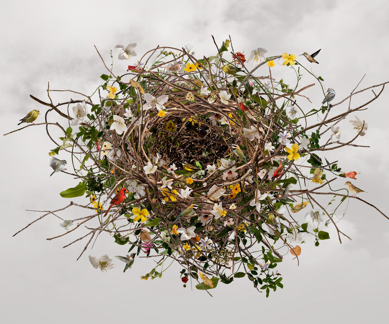 isabel-nest