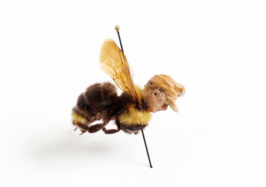 pest-bee