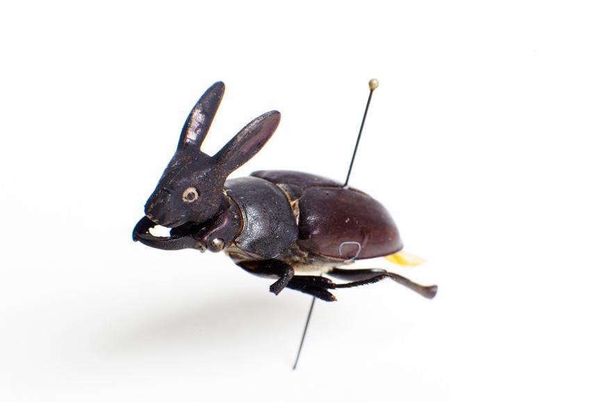 pest-beetle