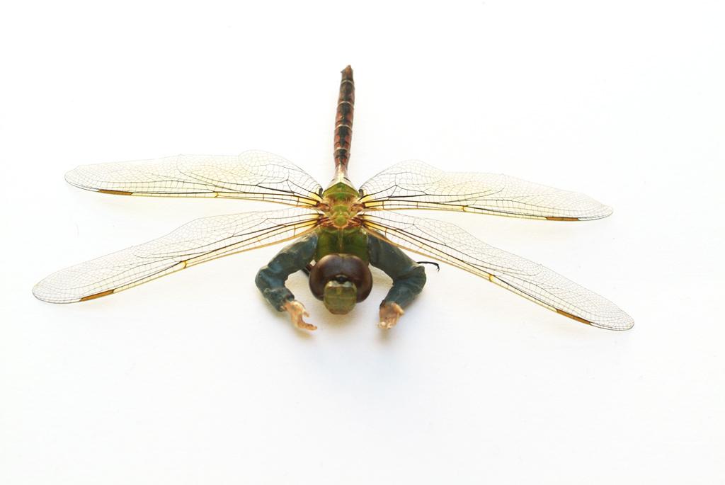 pest-dragonfly