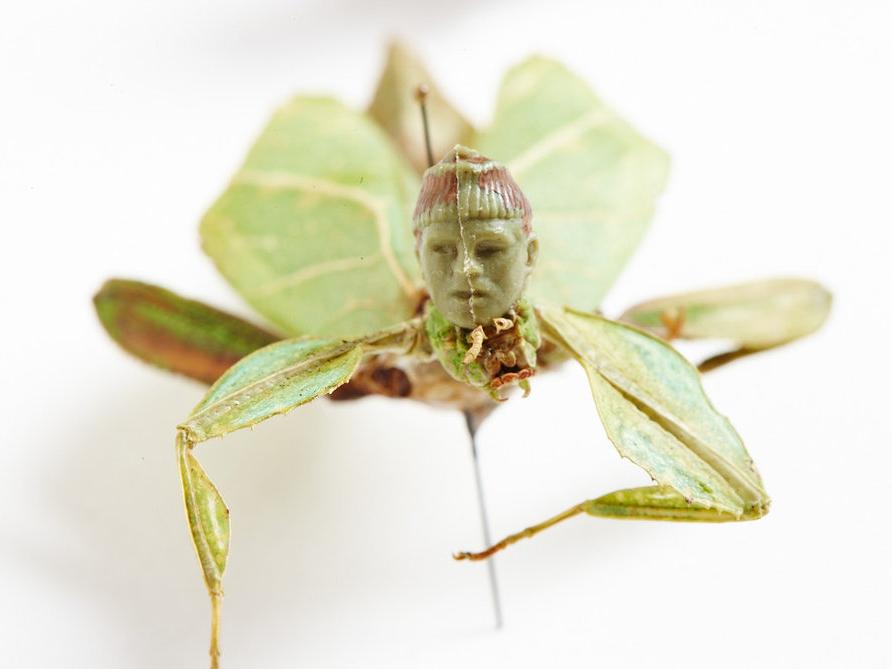 pest-green