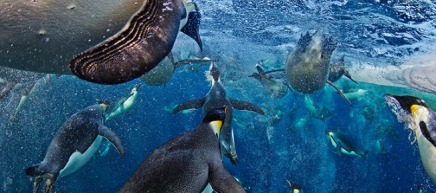 Paul Nicklen's World Press Photo Winning Shot