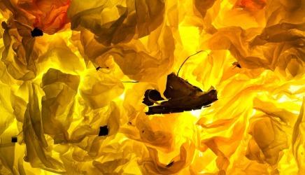 Survoyeurism: Kate McQuillen