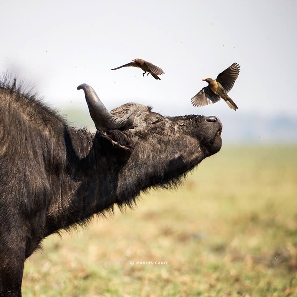 Cano-Botswana