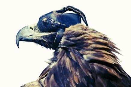 Lyle Owerko: EagleHunters