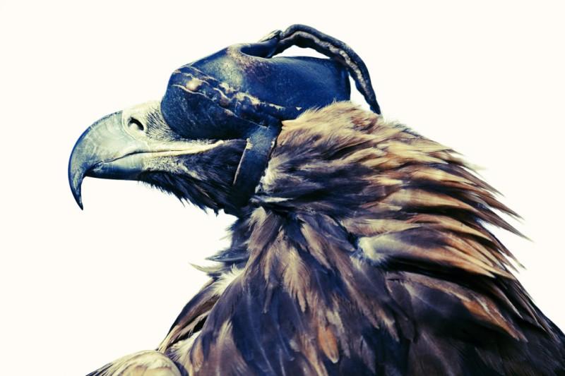 Eagle-top