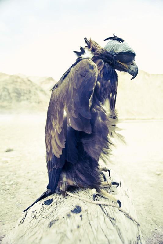EagleHunters