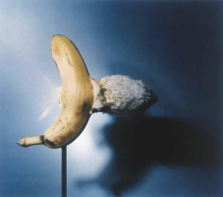 egerton-banana