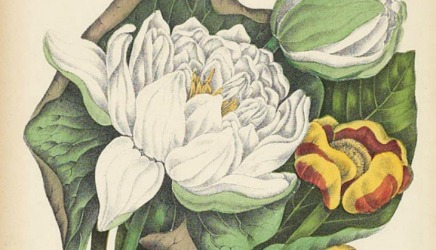 10/150: Agnes FitzGibbon's PioneerWildflowers